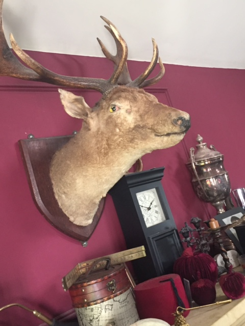 My own wall mounted stag